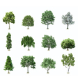 Set trees vector | Price: 1 Credit (USD $1)