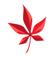cartoon red maple leaf vector image