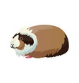 guinea pig domestic pet cavy vector image