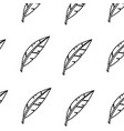 isolated feather design vector image vector image