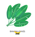 banana leaves icon vector image vector image