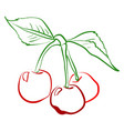 cherry on tree on white background vector image