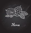 hand drawn ilama vector image vector image