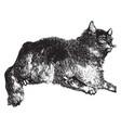 wild cat vintage vector image vector image