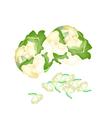 Fresh White Cauliflower on A White Background vector image vector image