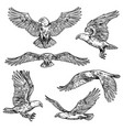 hawk or eagle sketch flying falcon vector image