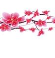 Sakura flowers background cherry blossom isolated