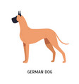 great dane or german mastiff gorgeous large dog vector image