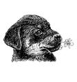 Rottweiler 15 vector image