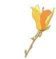 Yellow flower of Magnolia soulangeana vector image vector image