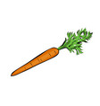 hand drawn orange carrot vector image