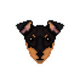 portrait of a manchester terrier in pixel art vector image vector image