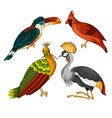 set of exotic birds vector image vector image