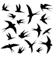 swallows circling vector image vector image