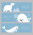 Arctic Banner Polar Bear Seal Beluga Whale vector image