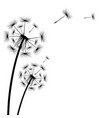 black silhouette a dandelion on a white vector image vector image