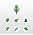 flat icon nature set of acacia leaf maple spruce vector image vector image