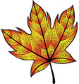 maple leaf - ink graphic drawingisolated graphic vector image