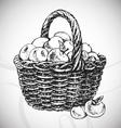 apple basket vector image vector image
