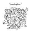 camellia flower and leaf hand drawn botanical vector image vector image