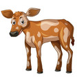 cow standing on white background vector image vector image