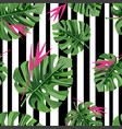 exotic jungle plant tropical palm leaves with pink vector image