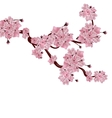 Lush Japanese cherry tree The branch of pink vector image