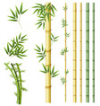 set of bamboo plant vector image