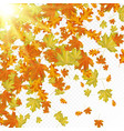 autumn leaves with sun rays vector image