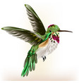 beautiful detailed hummingbird in fly vector image vector image