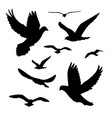 black silhouettes birds isolated white background vector image