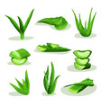 flat set of bright green aloe vera leaves vector image vector image