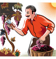 man in an attempt to seize the vineyard ripe vector image vector image