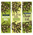 olive oil label with green fruit and leaf sketch vector image