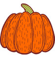 pumpkin -hand drawn isolated graphic art healthy vector image