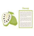 soursop whole and cut fruit frame text poster vector image vector image