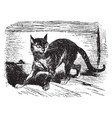 a cat is walking vintage line drawing or engraving vector image vector image