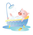 piggy taking a bath with foam and rubber duck vector image