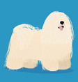 puli dog cartoon vector image vector image