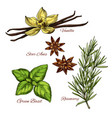 sketch icons of vecor spices and herbal flavorings vector image vector image
