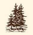 sketch silhouette a canadian pine tree vector image vector image