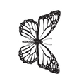Top view of beautiful monarch butterfly isolated vector image vector image