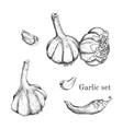 garlic ink sketches set vector image