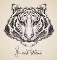 tiger sketch vector image vector image