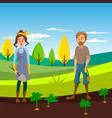 farmers working in the field gardeners harvesting vector image