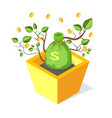 money bag tree growing from flower pot with soil vector image