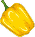 whole yellow bell pepper vector image vector image