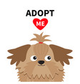 Adopt me dont buy shih tzu dog head inside opened