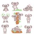 cute coala bears set funny animal cartoon vector image
