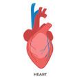 heart organ human body biology and anatomy vector image